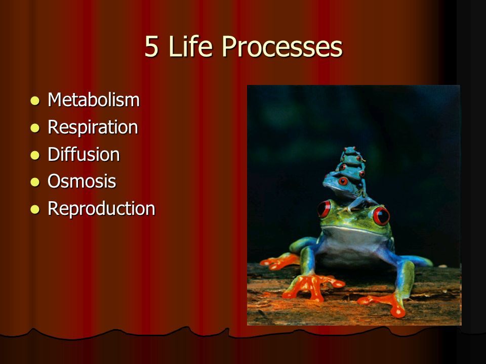 5 Life Processes Metabolism Metabolism Respiration Respiration Diffusion Diffusion Osmosis Osmosis Reproduction Reproduction