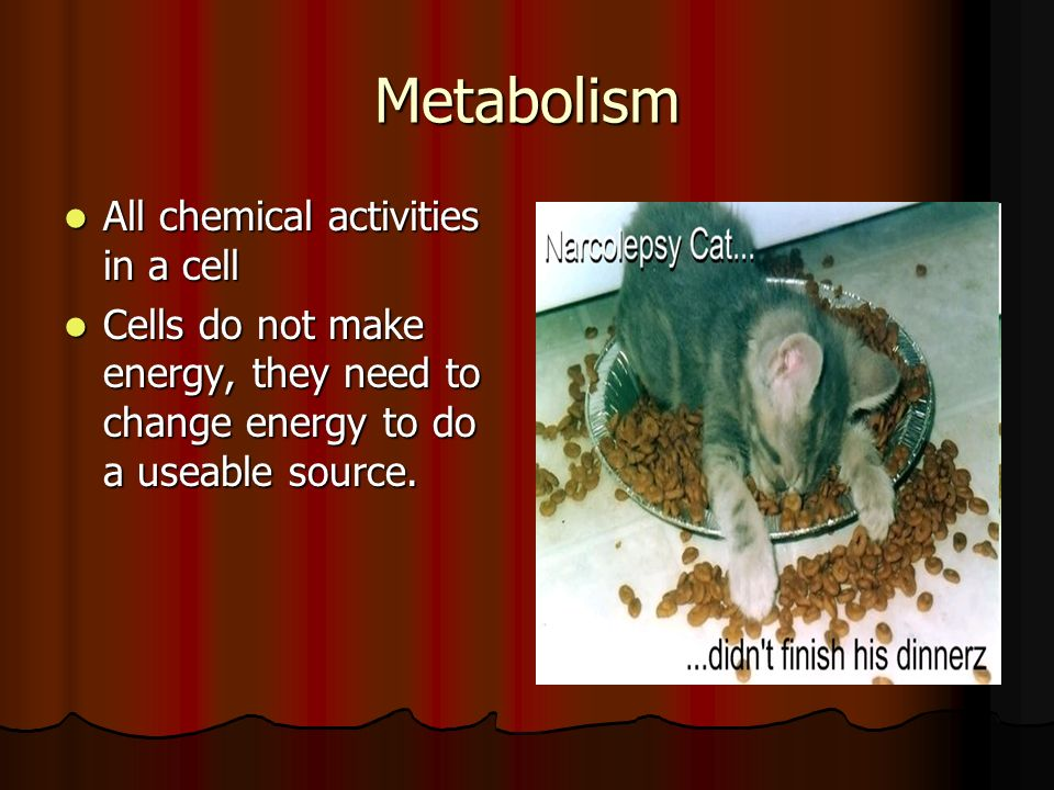 Metabolism All chemical activities in a cell All chemical activities in a cell Cells do not make energy, they need to change energy to do a useable source.