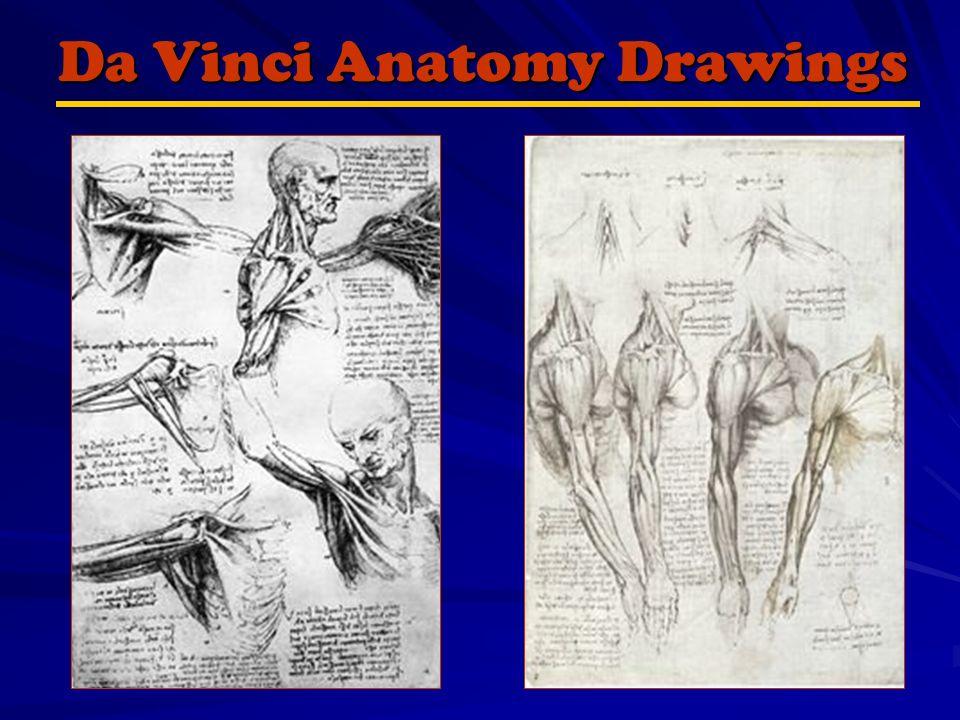 Basic Human Anatomy Drawing the Human Skeleton By Ken Schwager ...