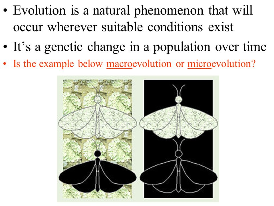 Evolution is a natural phenomenon that will occur wherever suitable conditions exist Its a genetic change in a population over time Is the example below macroevolution or microevolution