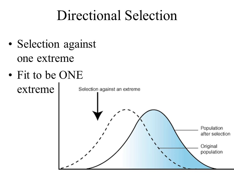 Directional Selection Selection against one extreme Fit to be ONE extreme