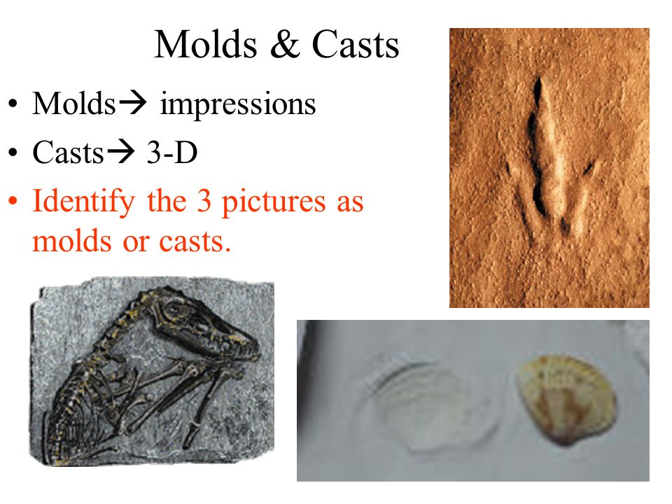 Molds & Casts Molds impressions Casts 3-D Identify the 3 pictures as molds or casts.