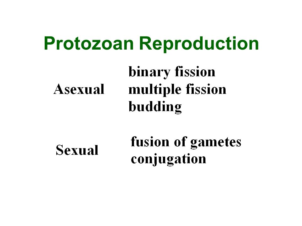 Protozoan Reproduction