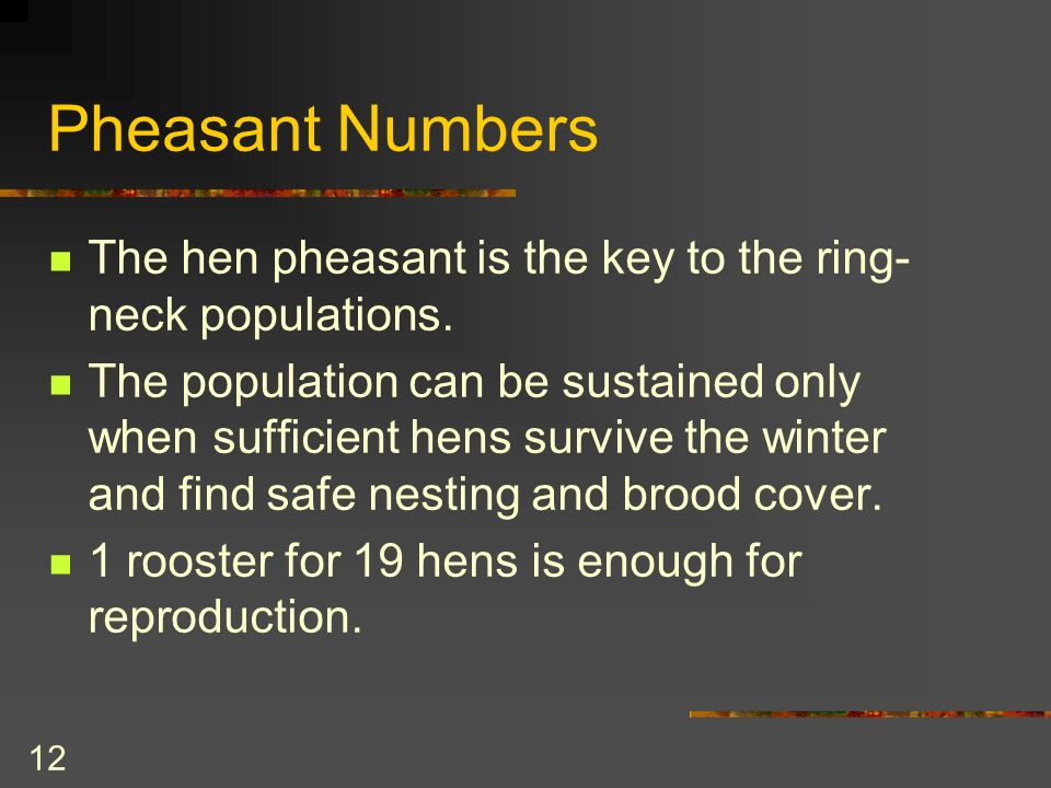 12 Pheasant Numbers The hen pheasant is the key to the ring- neck populations.