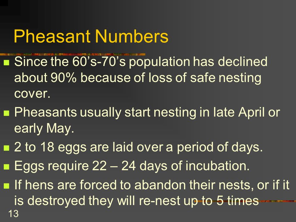 13 Pheasant Numbers Since the 60s-70s population has declined about 90% because of loss of safe nesting cover.