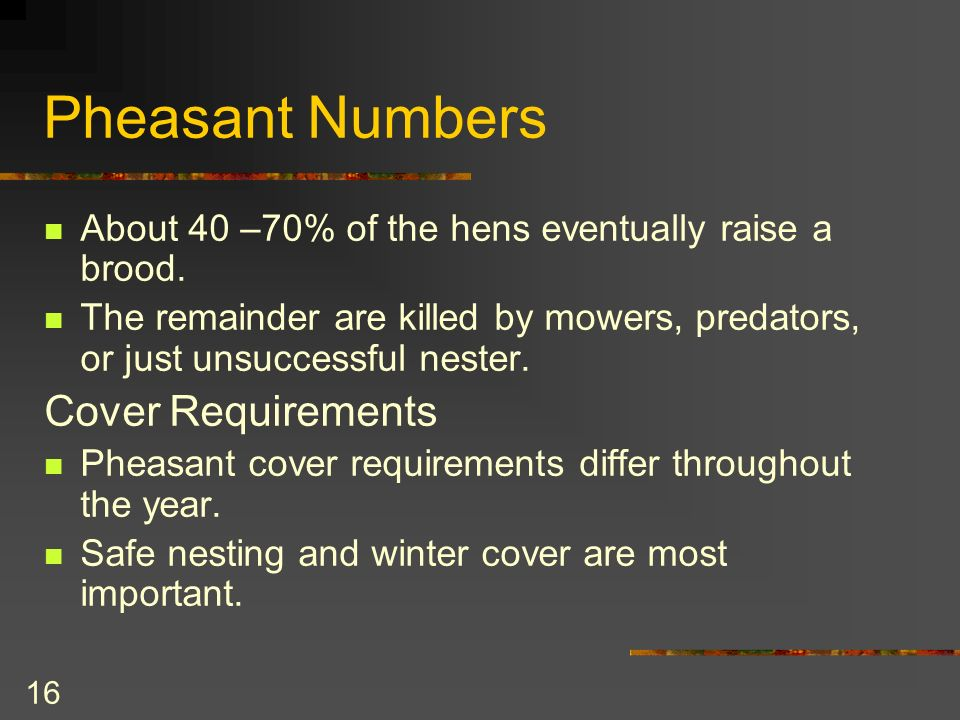 16 Pheasant Numbers About 40 –70% of the hens eventually raise a brood.