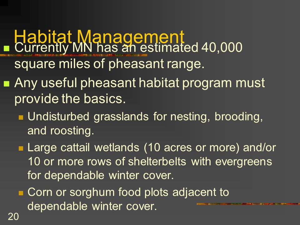 20 Habitat Management Currently MN has an estimated 40,000 square miles of pheasant range.