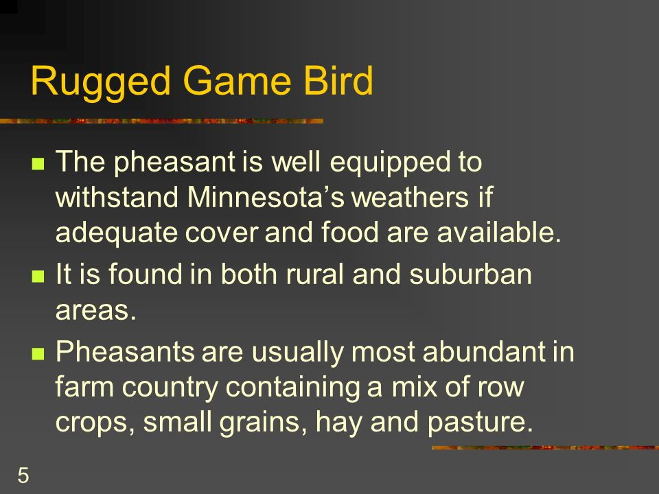 5 Rugged Game Bird The pheasant is well equipped to withstand Minnesotas weathers if adequate cover and food are available.