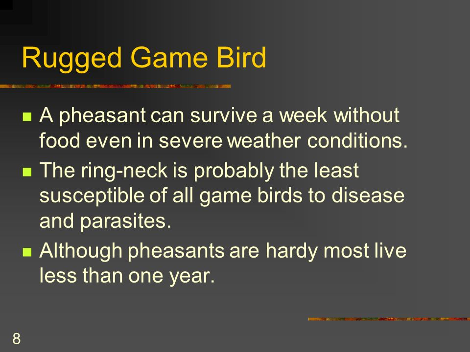 8 Rugged Game Bird A pheasant can survive a week without food even in severe weather conditions.