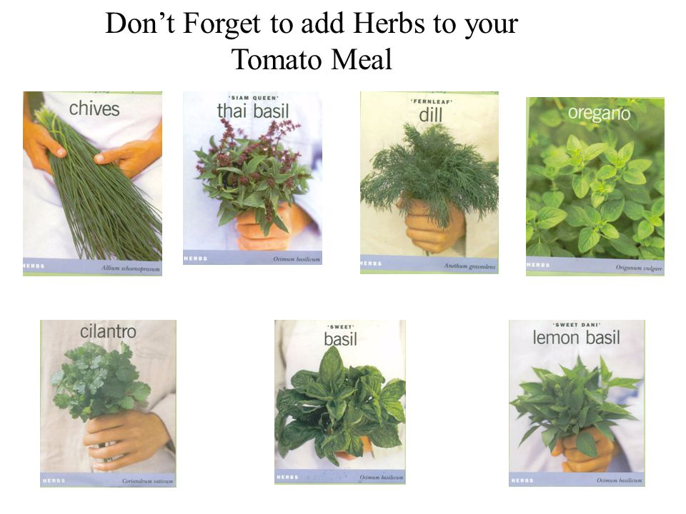 Dont Forget to add Herbs to your Tomato Meal
