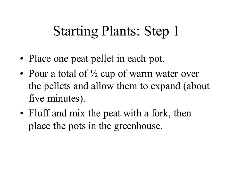 Starting Plants: Step 1 Place one peat pellet in each pot.