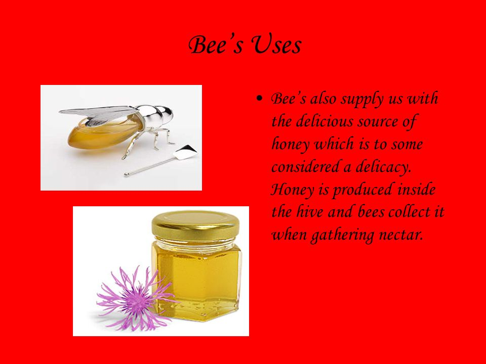Bees Uses Bees also supply us with the delicious source of honey which is to some considered a delicacy.