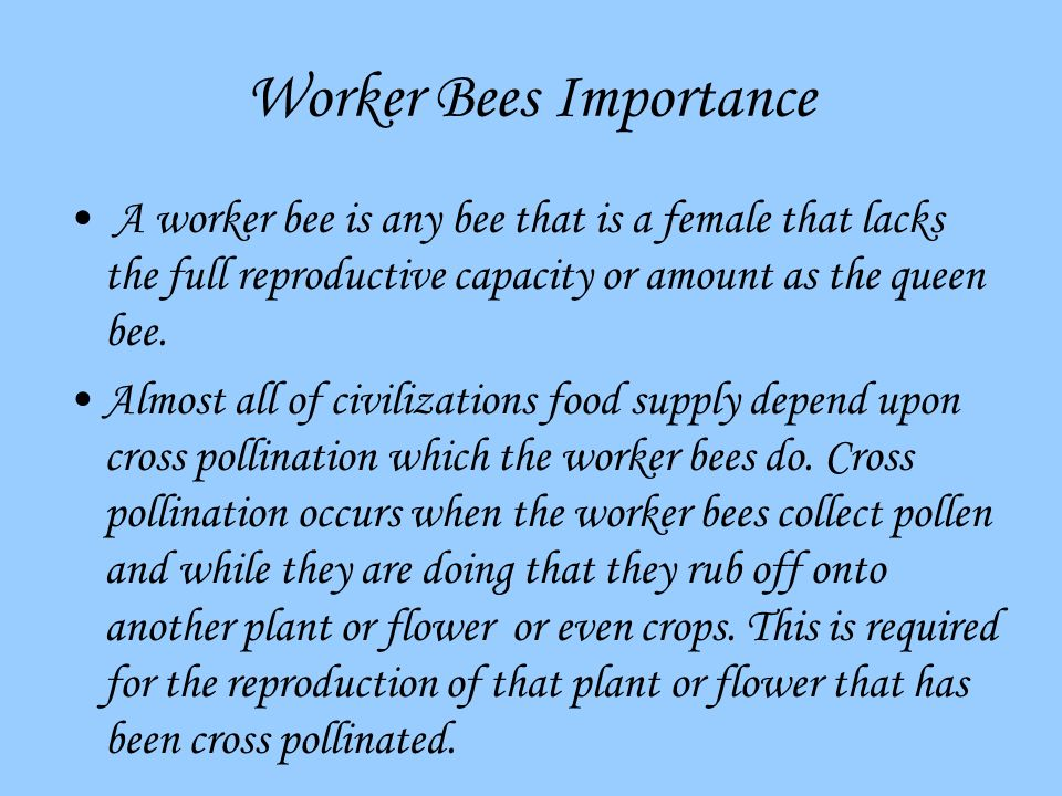 Worker Bees Importance A worker bee is any bee that is a female that lacks the full reproductive capacity or amount as the queen bee.