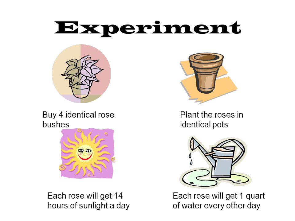Experiment Buy 4 identical rose bushes Plant the roses in identical pots Each rose will get 14 hours of sunlight a day Each rose will get 1 quart of water every other day