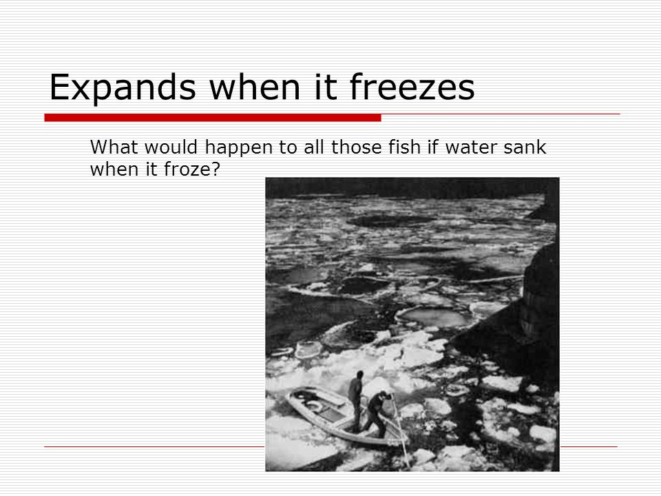Expands when it freezes What would happen to all those fish if water sank when it froze