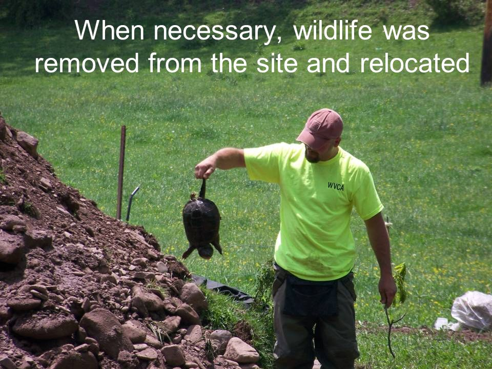 When necessary, wildlife was removed from the site and relocated