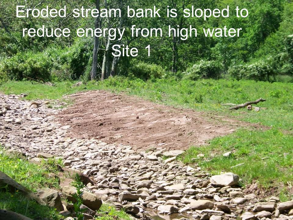 Eroded stream bank is sloped to reduce energy from high water Site 1