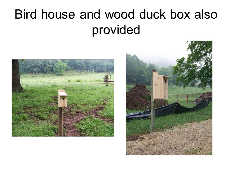Bird house and wood duck box also provided