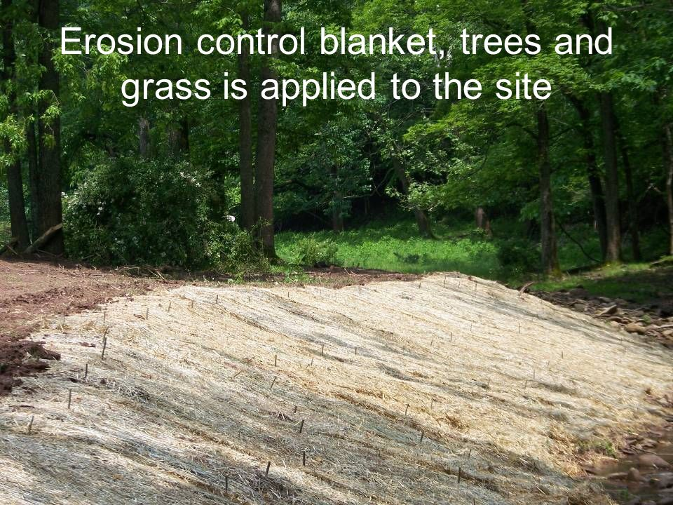 Erosion control blanket, trees and grass is applied to the site