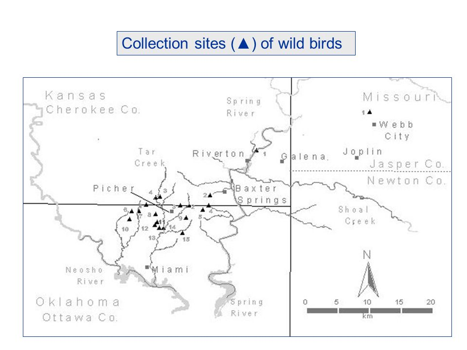 Collection sites () of wild birds