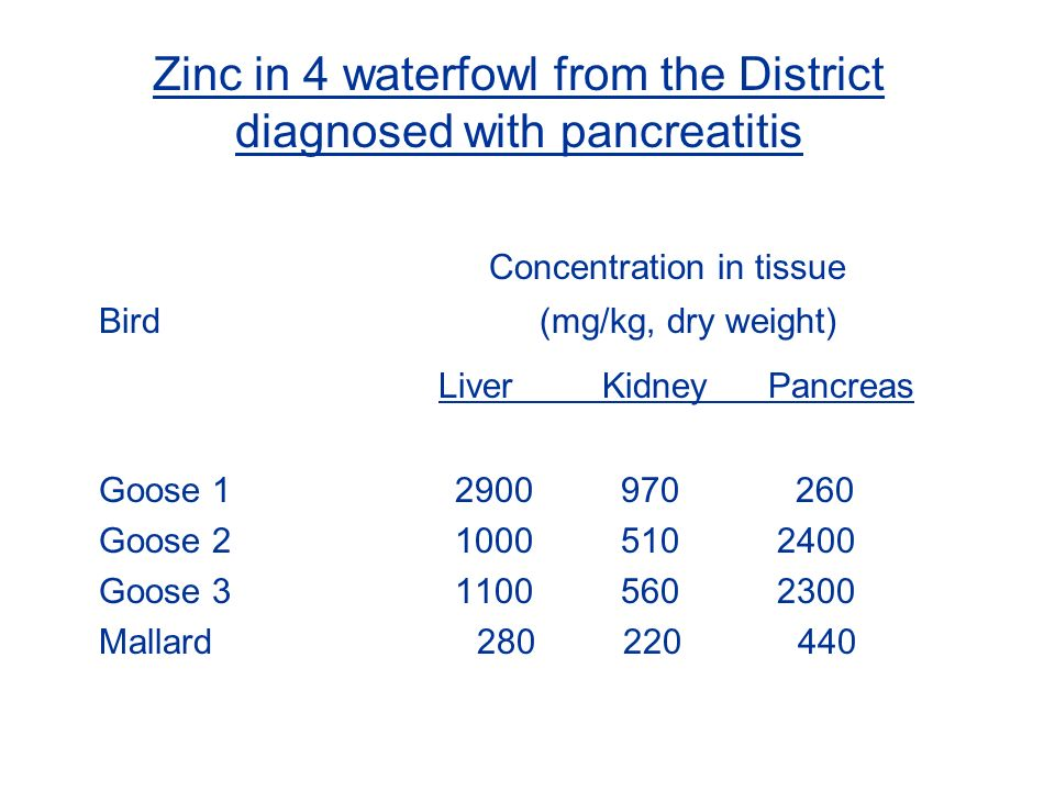 Zinc in 4 waterfowl from the District diagnosed with pancreatitis Concentration in tissue Bird (mg/kg, dry weight) Liver Kidney Pancreas Goose 1 2900 970 260 Goose 2 1000 510 2400 Goose 3 1100 560 2300 Mallard 280 220 440
