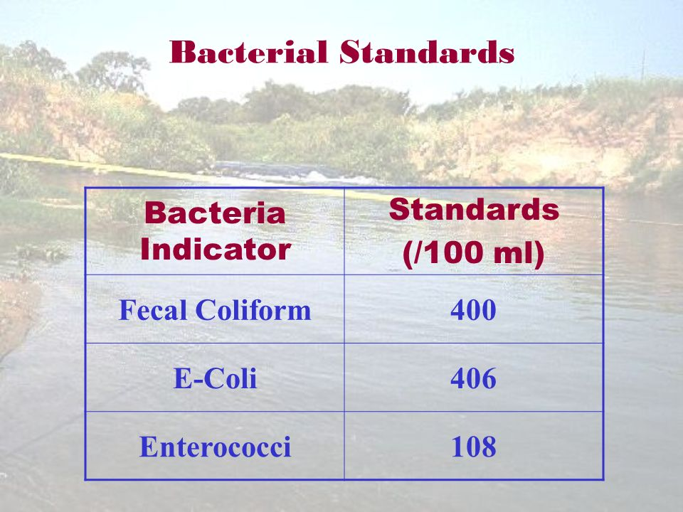 Bacterial Standards Bacteria Indicator Standards (/100 ml) Fecal Coliform400 E-Coli406 Enterococci108
