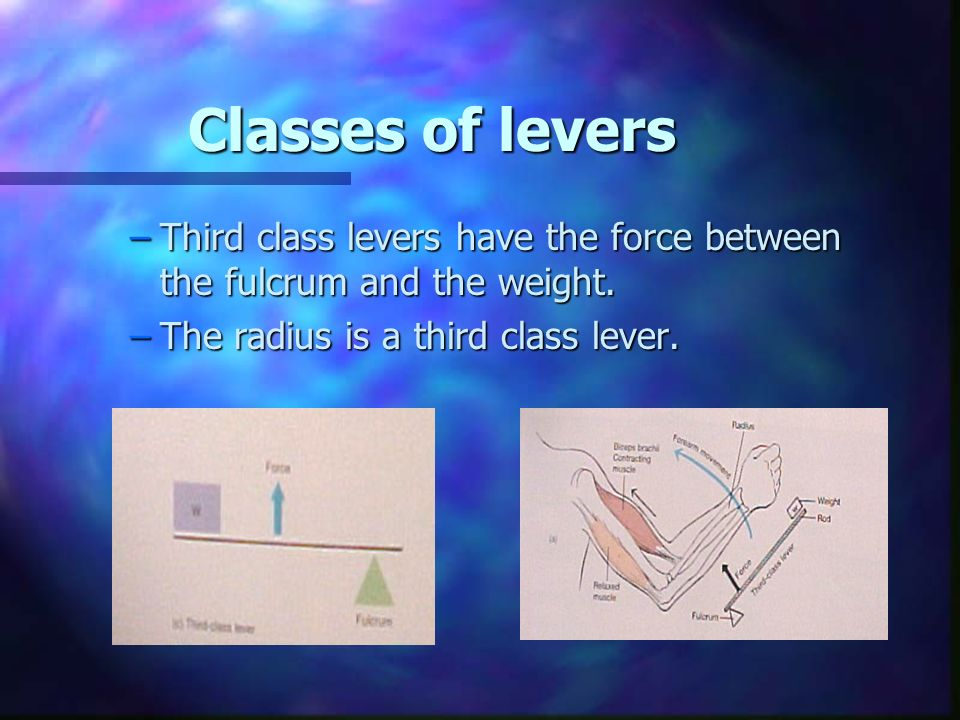 Classes of levers –Third class levers have the force between the fulcrum and the weight.