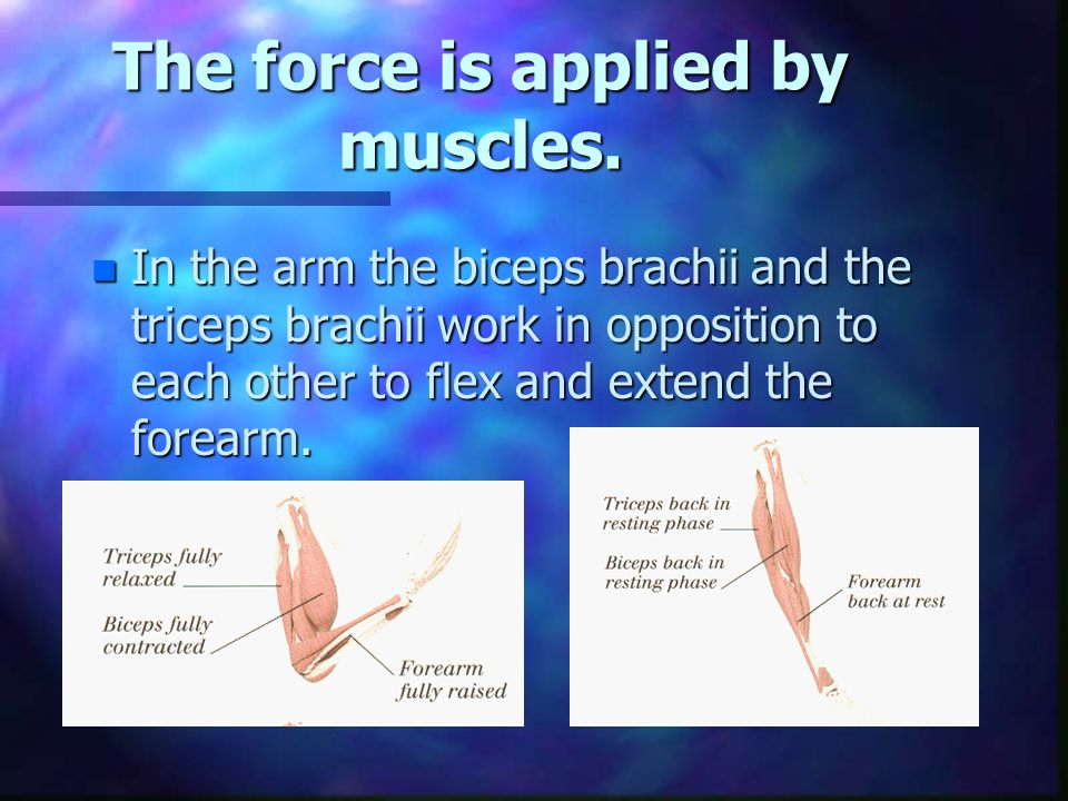 The force is applied by muscles.