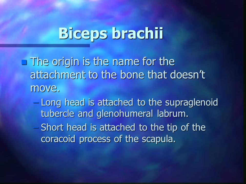 Biceps brachii n The origin is the name for the attachment to the bone that doesnt move.