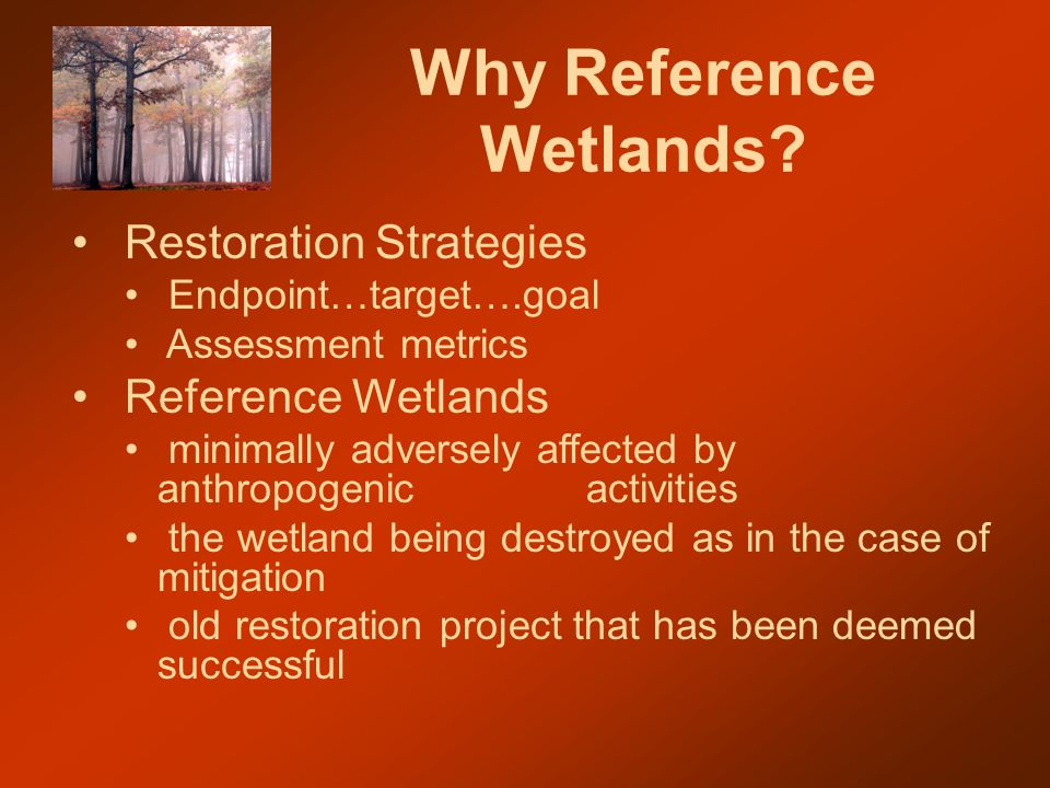 Why Reference Wetlands.