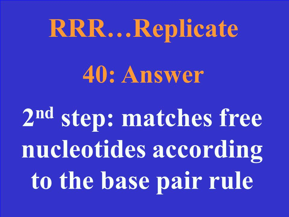 RRR…Replicate 40 During which step do we use DNA Polymerase and what does it do