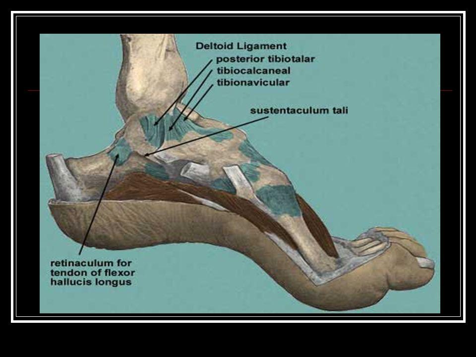 Deltoid Ligament Sprain - ppt video online download