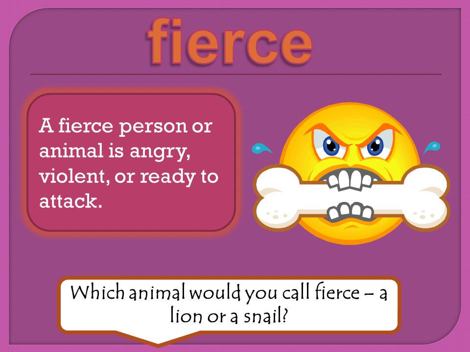 A fierce person or animal is angry, violent, or ready to attack.