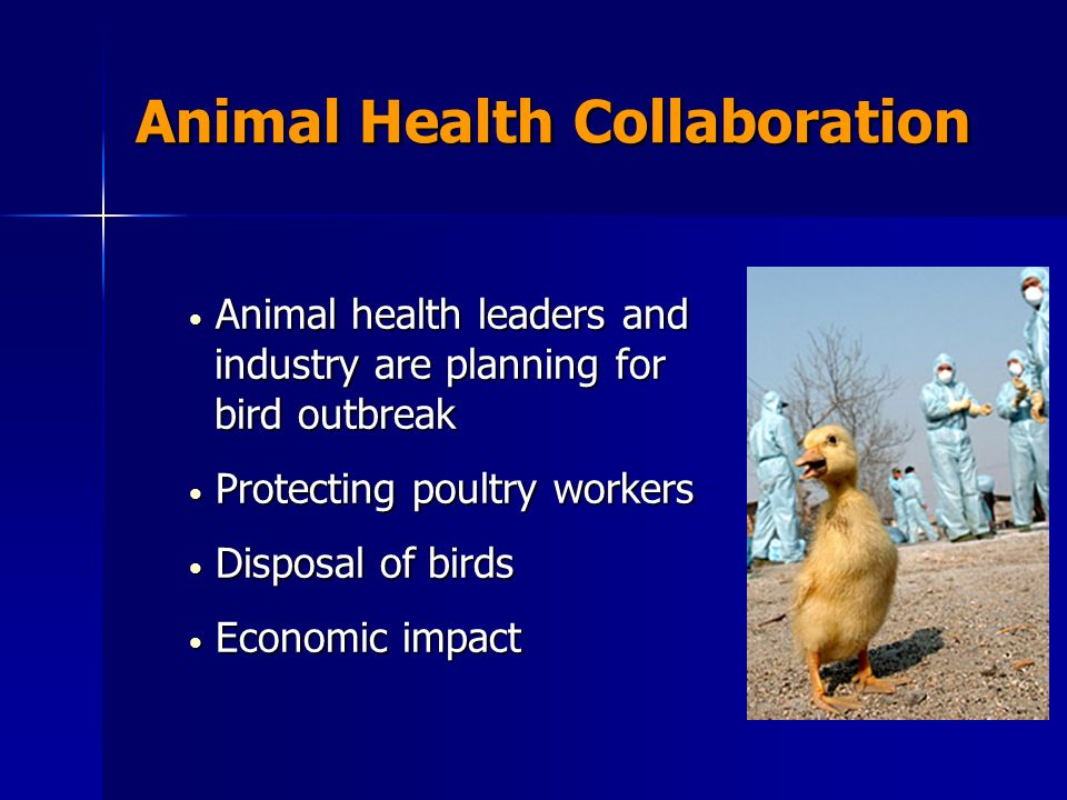Animal Health Collaboration Animal health leaders and industry are planning for bird outbreak Animal health leaders and industry are planning for bird outbreak Protecting poultry workers Protecting poultry workers Disposal of birds Disposal of birds Economic impact Economic impact