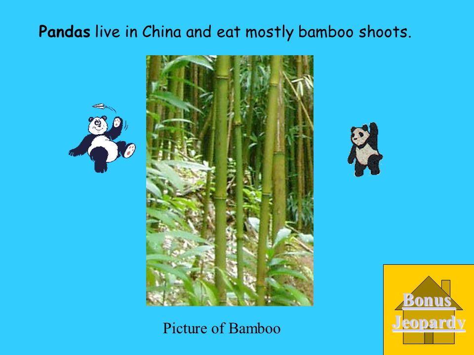 _____________ live in China and eat mostly bamboo shoots.