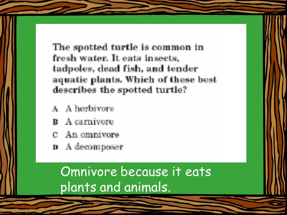Omnivore because it eats plants and animals.