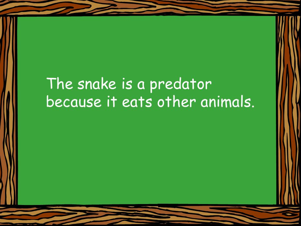 The snake is a predator because it eats other animals.