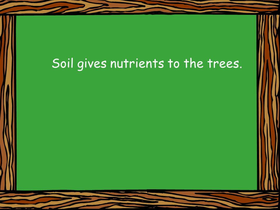 Soil gives nutrients to the trees.