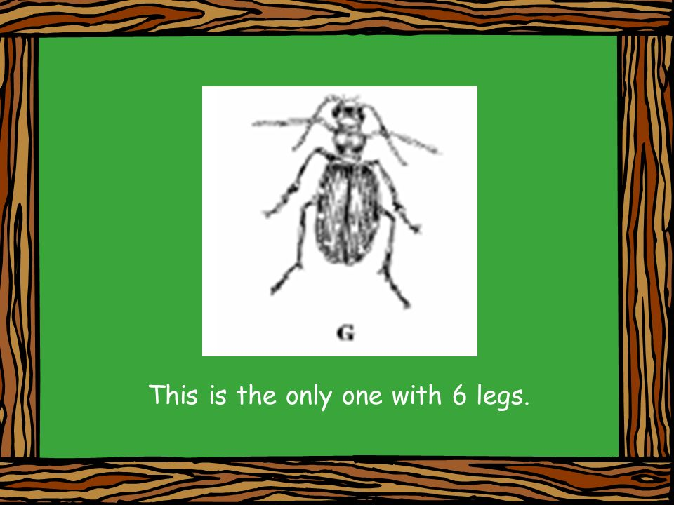 This is the only one with 6 legs.