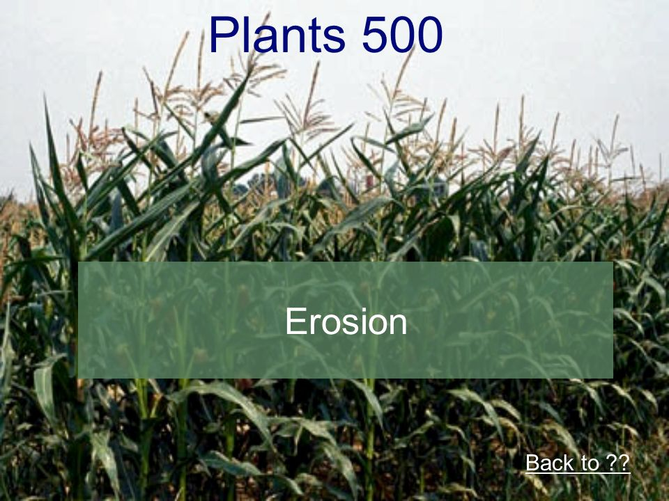 Plants 500 Erosion Back to