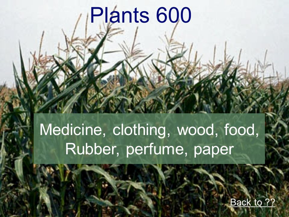Plants 600 Medicine, clothing, wood, food, Rubber, perfume, paper Back to