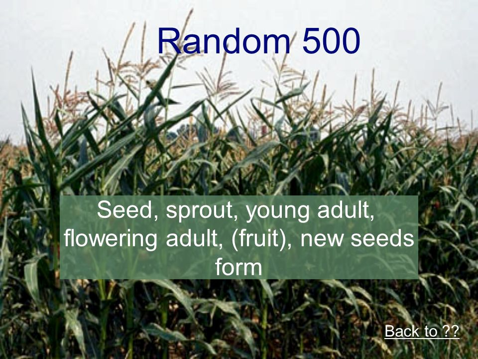 Random 500 Seed, sprout, young adult, flowering adult, (fruit), new seeds form Back to