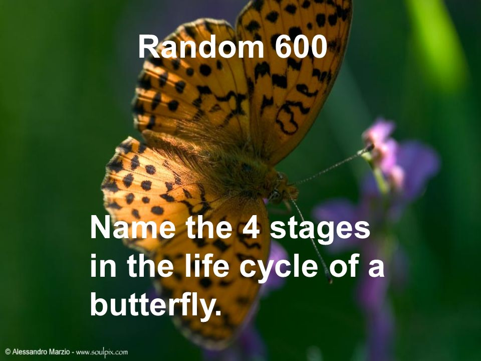 Random 600 Name the 4 stages in the life cycle of a butterfly.