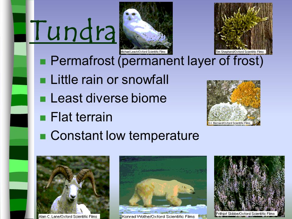 Key Term Abiotic Factors Physical or NONLIVING component of an ecosystem Rocks, Sand, Cliffs Snow, Rain, Hail Wind Sun, Heat, Cold