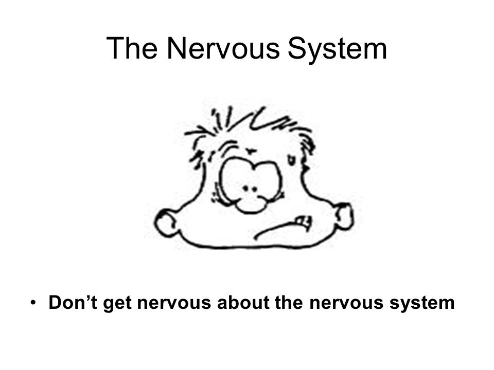 The Nervous System Dont get nervous about the nervous system