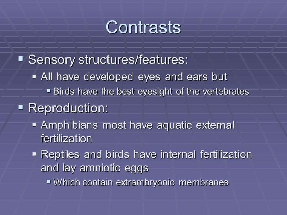Contrasts Sensory structures/features: Sensory structures/features: All have developed eyes and ears but All have developed eyes and ears but Birds have the best eyesight of the vertebrates Birds have the best eyesight of the vertebrates Reproduction: Reproduction: Amphibians most have aquatic external fertilization Amphibians most have aquatic external fertilization Reptiles and birds have internal fertilization and lay amniotic eggs Reptiles and birds have internal fertilization and lay amniotic eggs Which contain extrambryonic membranes Which contain extrambryonic membranes