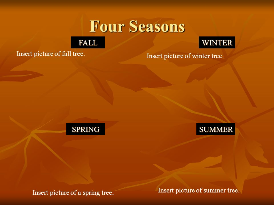 Four Seasons FALLWINTER SPRINGSUMMER Insert picture of winter tree Insert picture of a spring tree.
