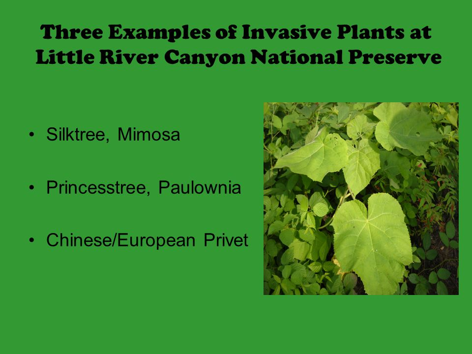 Highly invasive plants can be very destructive to the natural environment.