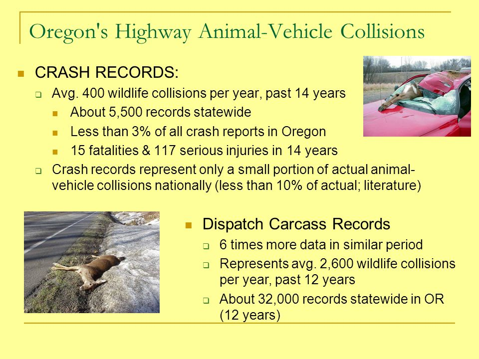 Oregon s Highway Animal-Vehicle Collisions CRASH RECORDS: Avg.