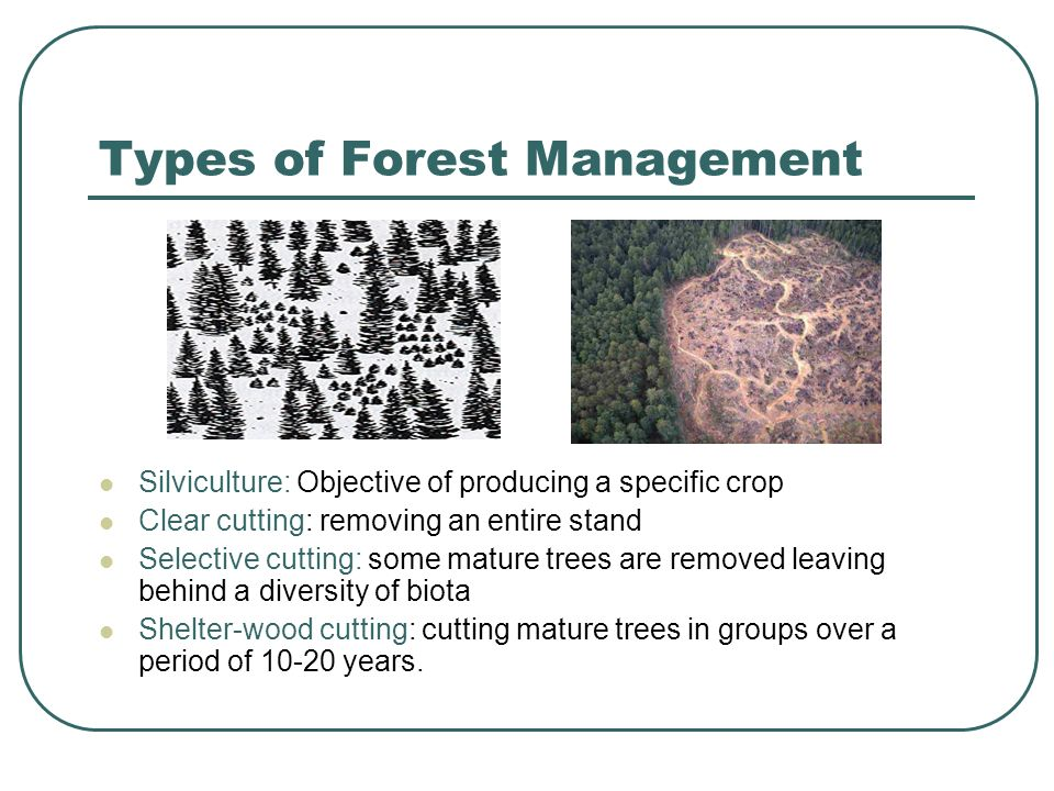 Types of Forest Management Silviculture: Objective of producing a specific crop Clear cutting: removing an entire stand Selective cutting: some mature trees are removed leaving behind a diversity of biota Shelter-wood cutting: cutting mature trees in groups over a period of 10-20 years.